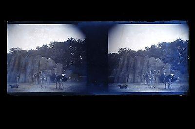 Dynamisch Zoo De Paris Vogelstrauß Foto Amateur Platte Gläser Stereo Negative