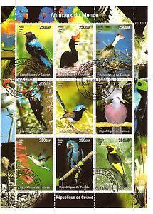 GUINEA-1-GIORNO-i-diversi-specie-di-uccelli-di-la-nature-SP51