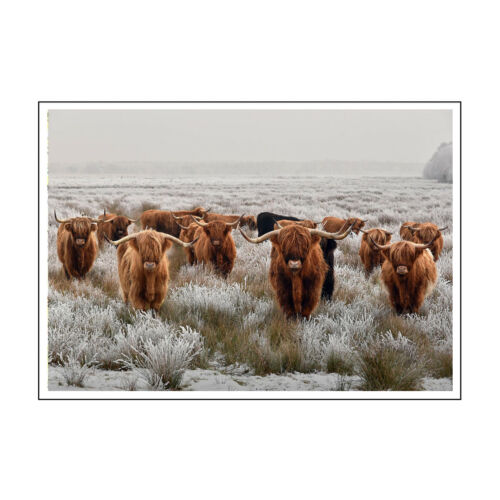 DEEP FRAMED CANVAS WALL ART PICTURE PRINT HERD HIGHLAND COWS 1 BROWN GREY