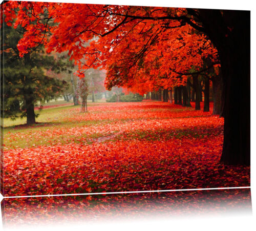 Rot gefärbter Park im Herbst  Leinwandbild Wanddeko Kunstdruck