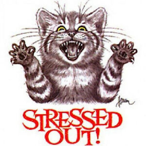 Image Is Loading Stressed Out Cat Funny T Shirt All Sizes
