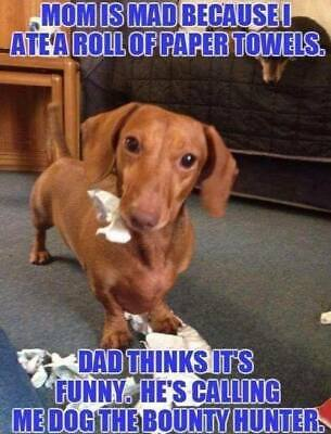"DACHSHUND Love My Dad Fridge Magnet 4/"" x 3/"""