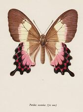 Vintage BUTTERFLY Print Fluminense SWALLOWTAIL Butterfly Insect Print 2076