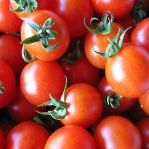tomate fandango 15 graines blight tol rant l gumes fruits ebay. Black Bedroom Furniture Sets. Home Design Ideas