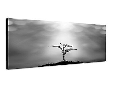 Setzling junger Baum neues Leben Sonne 150x50cm Panoramabild Schwarz Weiss