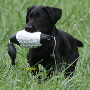 Duck Hunting Dog Training Supplies