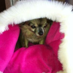 Chihuahua Puppy Dog Cream & Raspberry Pink Bed Cat Bed Snuggle Sack Sak Sac