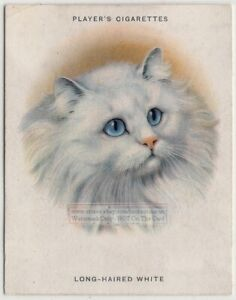 Breeds-of-Cats-Long-Haired-White-Persian-Cat-Feline-1930s-Ad-Trade-Card