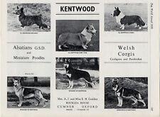 CARDIGAN CORGI ORIGINAL VINTAGE OLD DOG BREED ADVERT KENNEL PAGE 1958 KENTWOOD