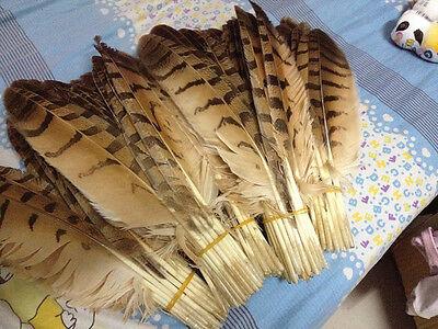 Wholesale 20-100pcs natural pheasant feather 28-35cm/12-14inch decorative DIY