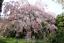 20-Seeds-Malus-Crabapple-Apple-Viable-Edible-Rare-Kinds-Bonsai-Plants-in-Garden thumbnail 18