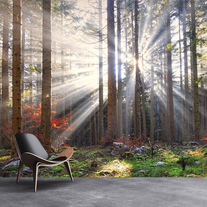 Sun Shine Autumn Trees Fotomurali foresta foresta foresta Carta Da Parati Paesaggio Home decor 884c9a