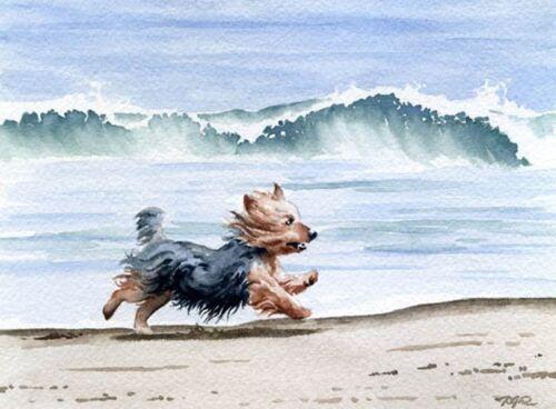 YORKSHIRE TERRIER Dog Watercolor 8 x 10 Art Print by Artist DJR
