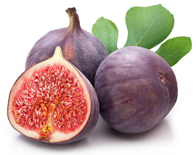 100pcs Figs Fruit Seeds Edible Syconium Red Figs Ficus Carica Seeds Common Figs