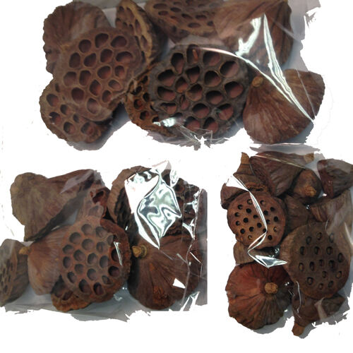 SMALL MEDIUM AND LARGE MIX FOR CHRISTMAS FESTIVE WREATHS 30 DRIED LOTUS PODS