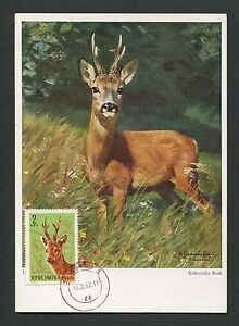 Fast Deliver Romania Mk 1961 Fauna Wild Hirsch Reh Deer Maximumkarte Maximum Card Mc Cm D2839 Stamps
