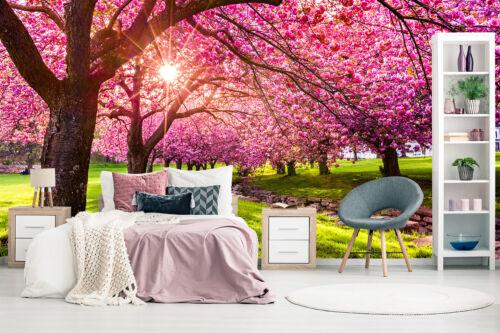 Kleistertapete oder Selbstklebende Fototapete Kirschblüte Zierkirsche Frühling
