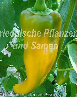 🔥 🌶️ Ziegenhorn 10 frische Samen Paprika gelb lang ertragreich Balkon Kübel