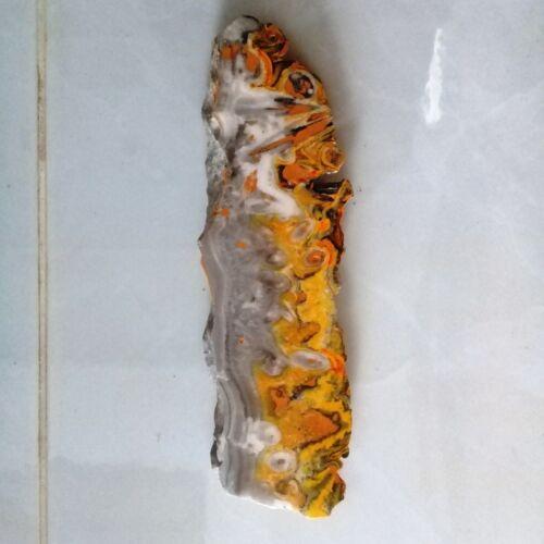 Natural Indonesia Bumble Bee Jasper áspero losa de un lado polaco que enfrentan espécimen