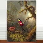 "Martin Johnstone Head Hummingbird with Nest ~ FINE ART CANVAS PRINT 8x12"""