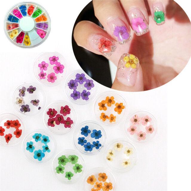 12 Color Wheel Elegant Nail Art Decor Real Dried Flowers For Uv Gel