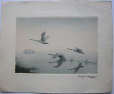 Karl Ewald Olszewski (1884-1965) Drei fliegende Schwäne Orig Radierung 1970