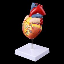 Disassembled Anatomical Human Heart Model Anatomy Medical Teaching Tool Us Stock