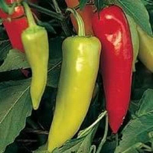 300 HUNGARIAN HOT WAX / BANANA PEPPER Capsicum Annuum Yellow - Red Veggie Seeds