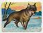 54-566-SAMMELBILD-WOLF miniatura 1
