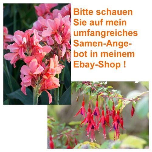 Terrasse Balkon Wintergarten Blumen Samen exotische Pflanzen FUCHSIE+BLUMENROHR