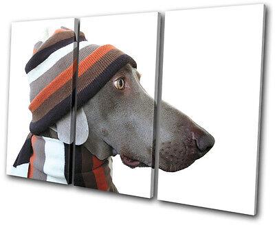Animals Dog in Hat TREBLE CANVAS WALL ART Picture Print VA