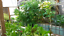 Aquaponics-Bell-Siphon-8-034-Media-or-Smaller-Mini-Bed-8000-Siphons-Worldwide