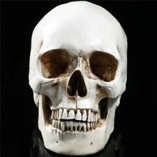 Life Size Human Anatomical Anatomy Resin Head Skeleton Skull Teaching Model