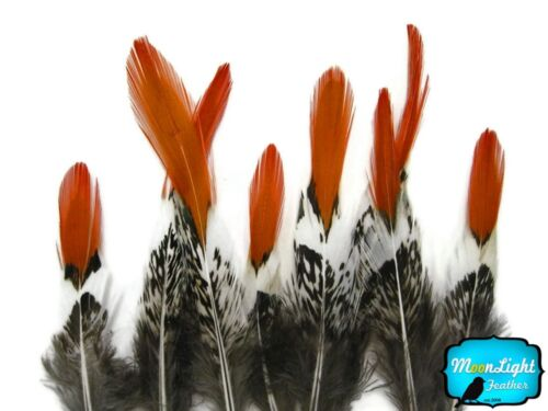 SHORT NATURAL Orange Tips Lady Amherst Pheasant Feather Craft Jewelry 5 Pieces