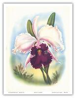 Hawaiian Orchid White Cattleya Vintage Airbrush Art Poster Print