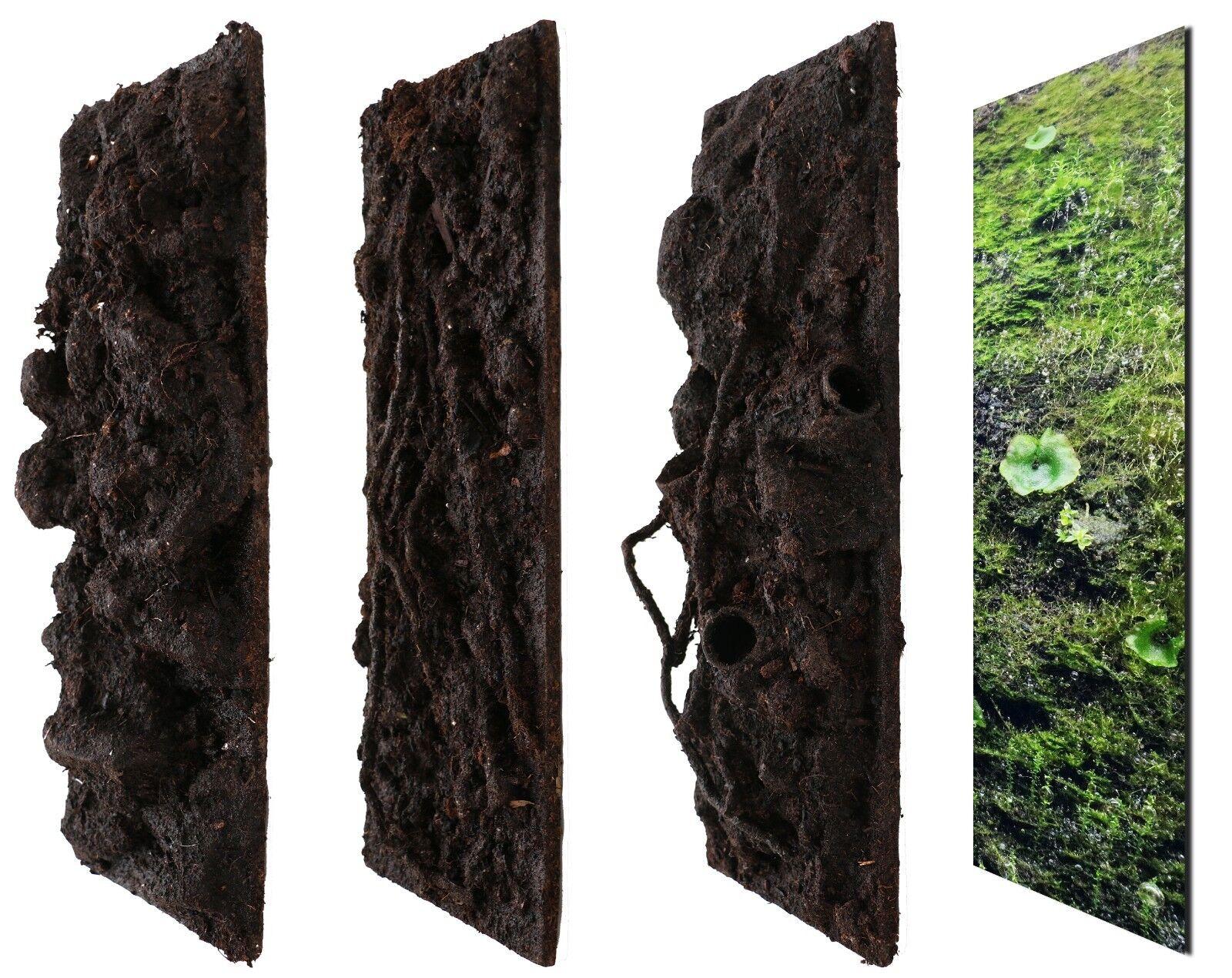 Terrario parete posteriore terrawall ➕  struttura  foresta pluviale 3er Set x 200x500x10mm NUOVO