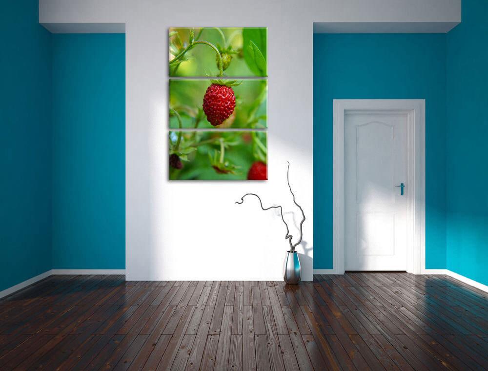 Petit Wilde Fraise Fraise Fraise 3-Teiler Image de Toile Décoration Murale 9b6e19