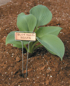 """RAPITEST COPPER GARDEN PLANT FLOWER 10"""" LABEL STAKES MARKERS 25 PACK WITH PEN"""