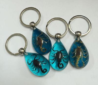 12 pcs KeyChain Scorpion Design Specimens Magic Jewelry