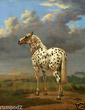 Vintage Horse/Equestrian Art Print/Poster Reproduction/Appaloosa Pony  8x10 inch