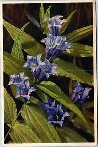 POSTCARD-Willow-Gentian-Gentiana-asclepiades