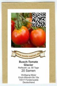 Aimable Tomate-arbuste Tomate-glacier-très Tôt-froid Tolérée - 20 Graines-ch - 20 Samen Fr-fr Afficher Le Titre D'origine