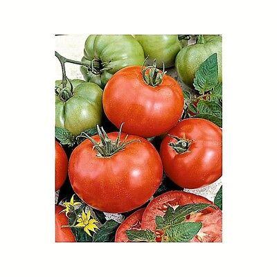 Marlboro Ace Red Heirloom Tomato Seeds