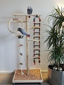 Le pont suspendu indépendant de perroquet en bois de suspension de perroquet grimpant joue