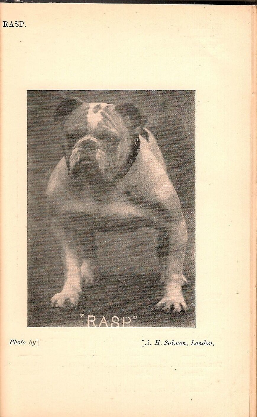 Pin By Sophia Pets On British Bulldog British Bulldog