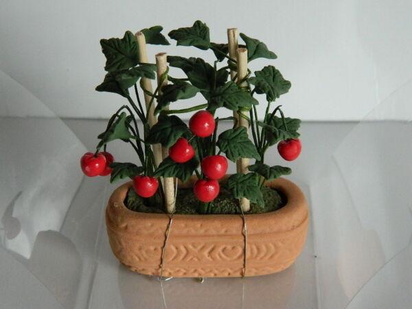 (g2) échelle 1/12th Maison De Poupées Tomate Plante En Terre Cuite Pot Pour Aider à DigéRer Les Aliments Gras