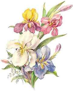 Iris-Purple-Pink-Yellow-Blue-Flower-Select-A-Size-Waterslide-Ceramic-Decals-Bx
