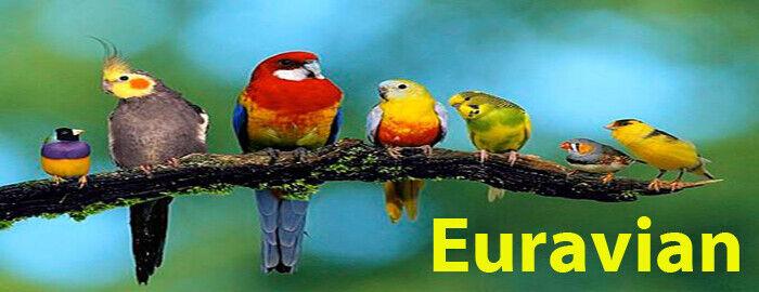 euravian