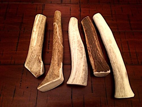 Medium Elk Antler Dog Chew HARD MARROW-Free Shipping! Great Treat-Great Deal