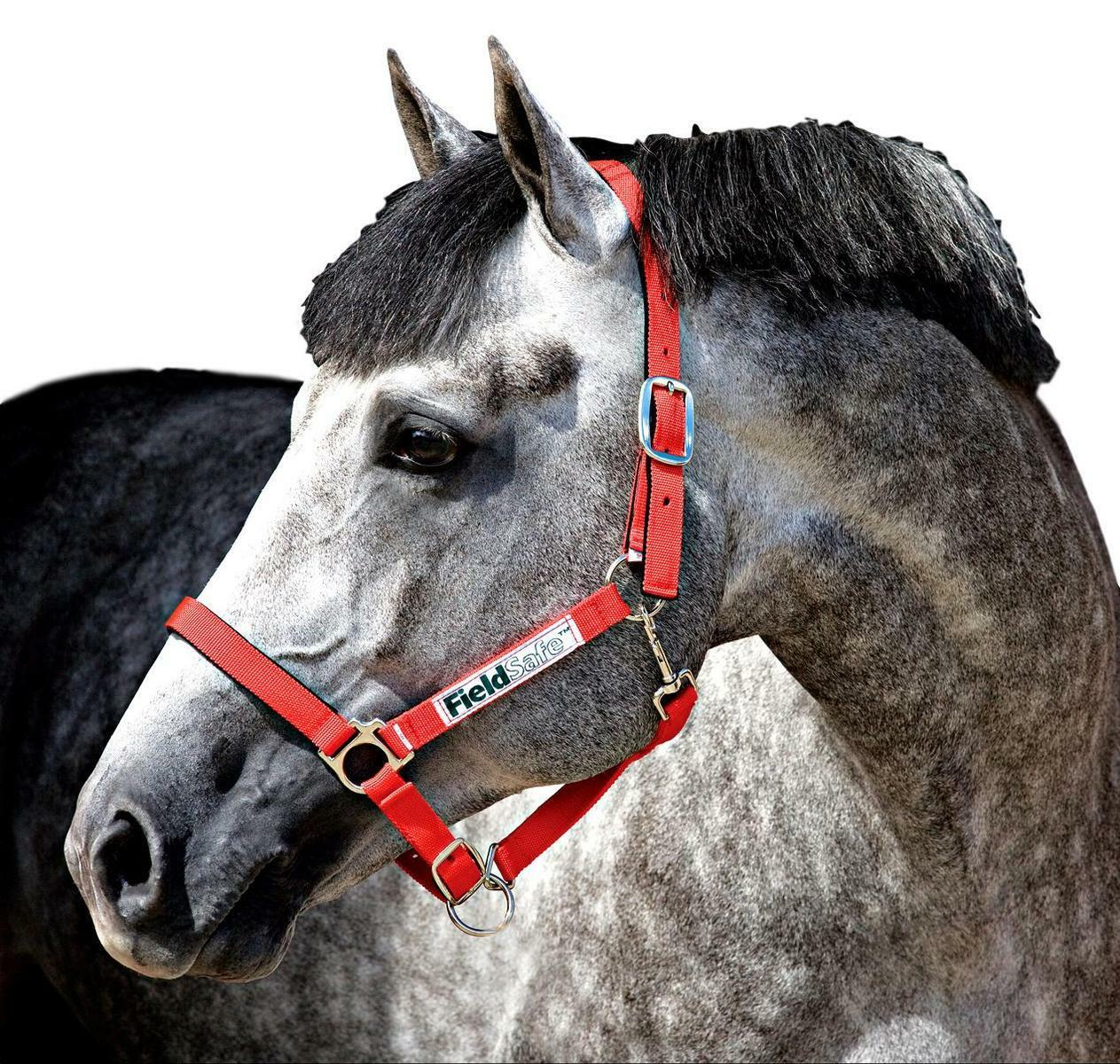 Horseware Ireland Field Safe Breakaway Halter with Adjustable Nose